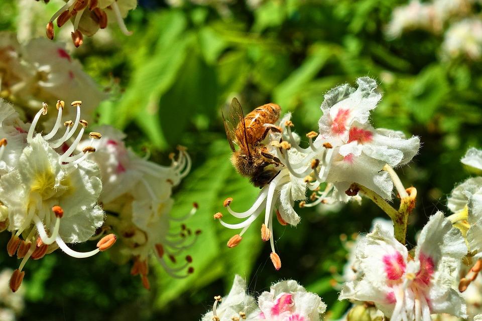 Gesztenyevirág méhecskékkel