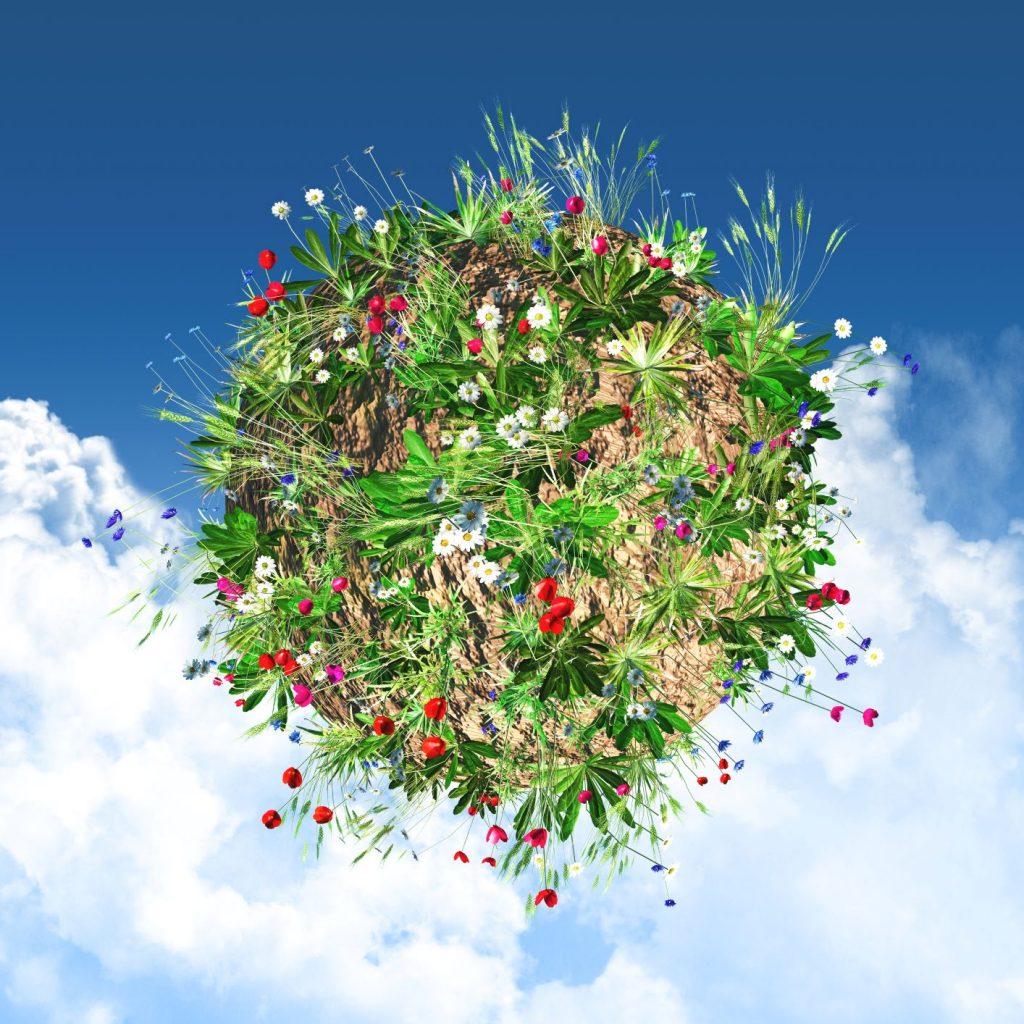 virágzó földgomb