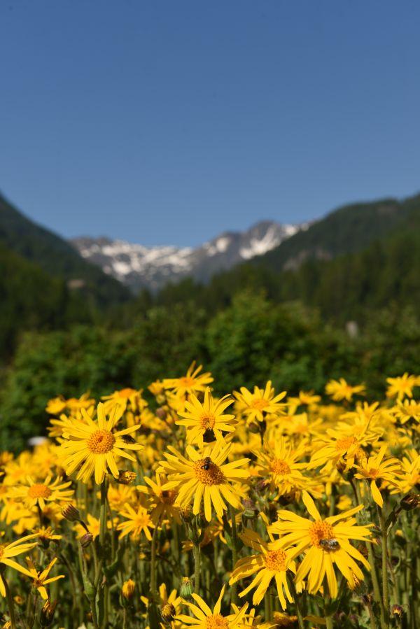 A zúzódások ellenszerét a hegyekben keresd!